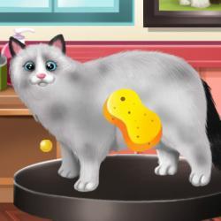 jeux de chat