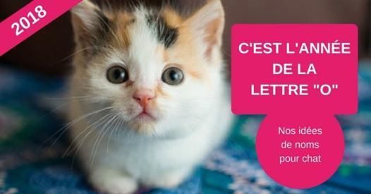 annee des lettres pour chat 2018