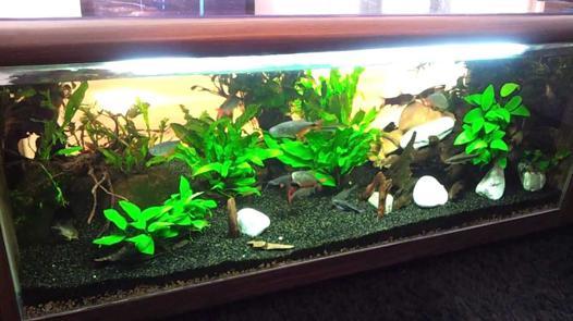 aquarium 250 litres
