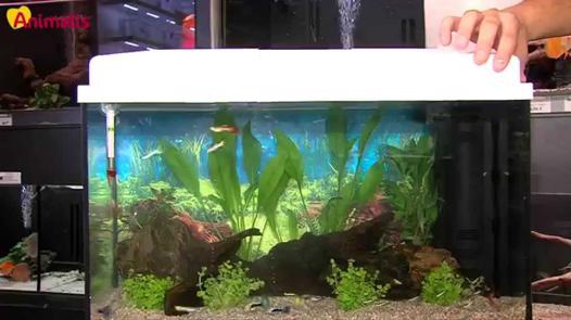 aquarium débutant