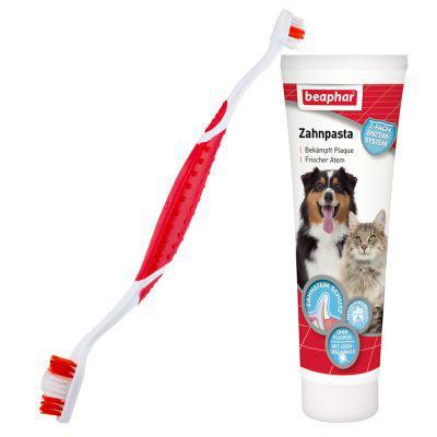 brosse à dents pour chien