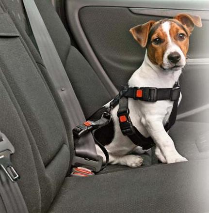 ceinture de sécurité pour chien