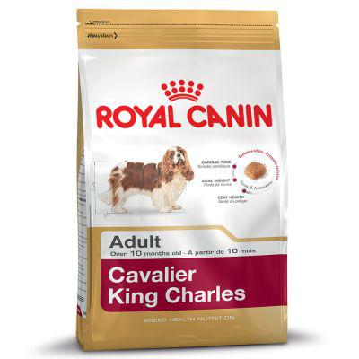 croquette cavalier king charles