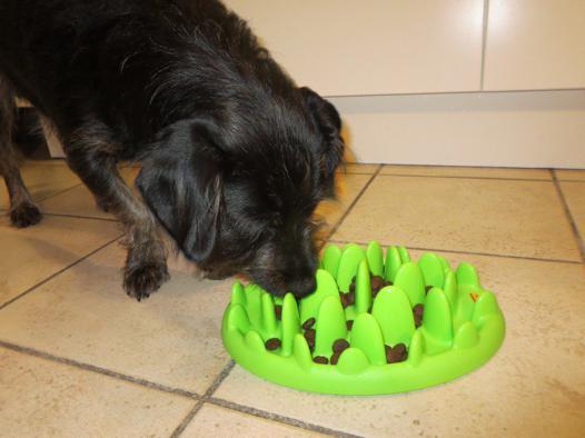 gamelle anti glouton petit chien