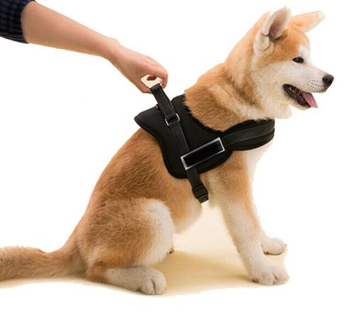 harnais pour chien taille moyenne