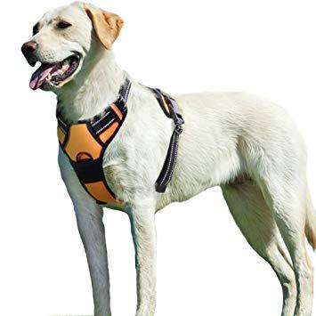harnais traction chien