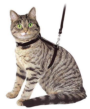 harnet pour chat