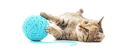 jouer chat
