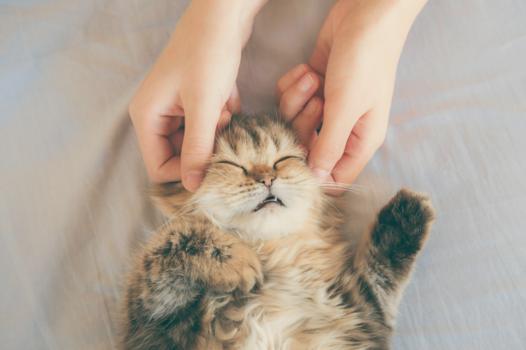 massage chat