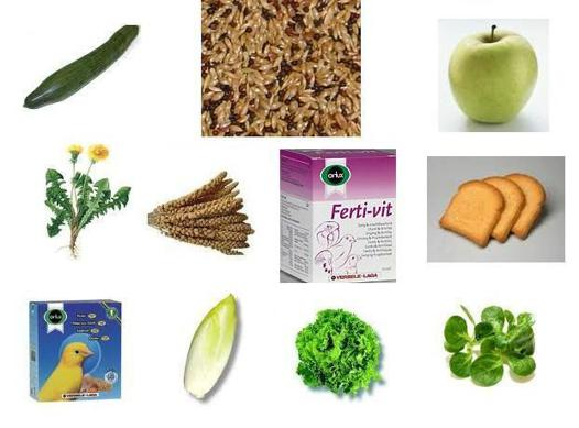 nourriture canari