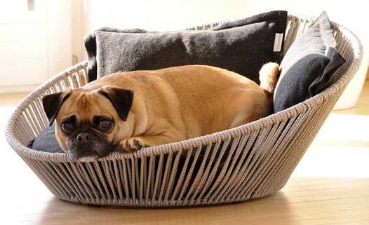 panier pour chien design