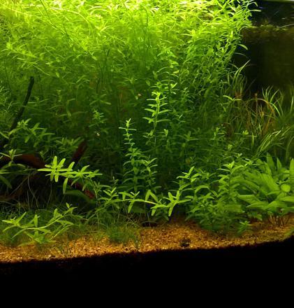 terreau aquarium